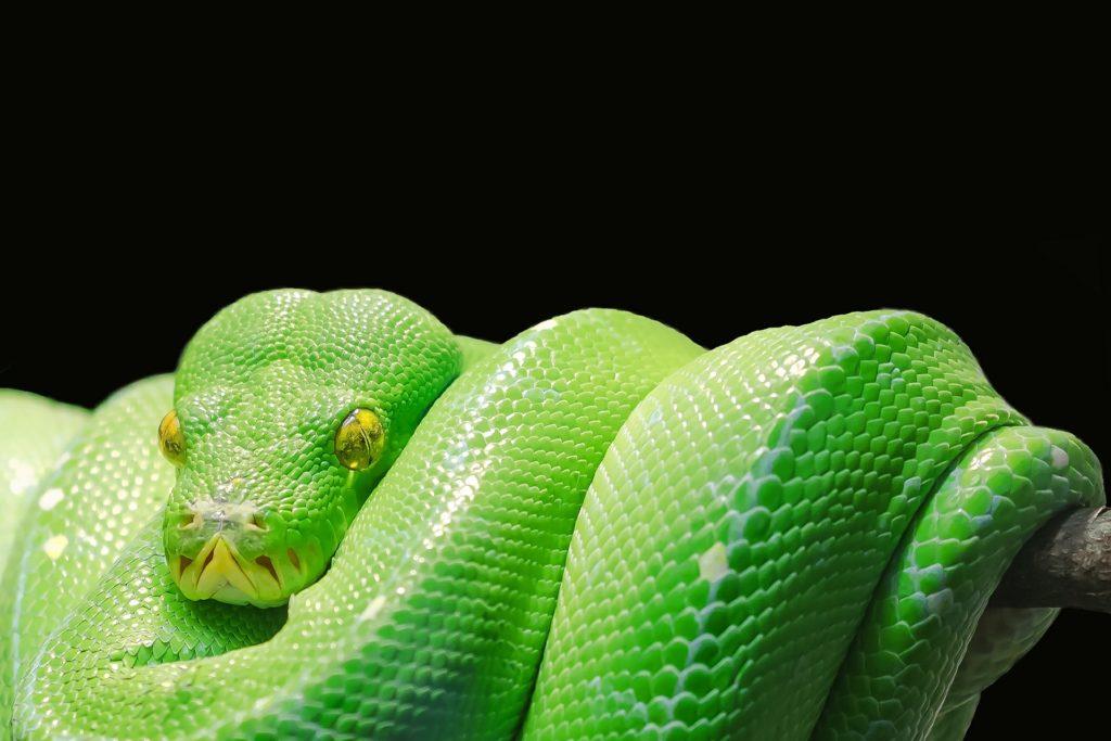 Pythonを独学で学ぶ